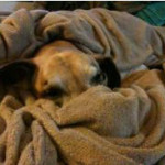 He loved to sleep under the blanket with nose covered.
