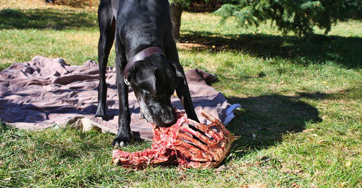Are Dogs Carnivores or Omnivores? The Big Debate