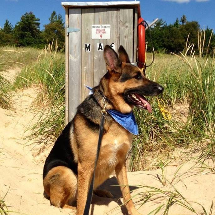 Side effects from rabies vaccine in dogs