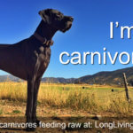 Are Dogs Carnivores?